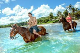 Horsebake swim slu 75